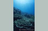 Coral-landscape