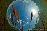 Drijvend fonteinkruid ( Potamogeton natans ), Amerdiep