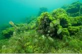 Rotslandschap met algen en waterplanten