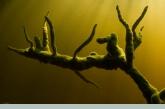 Freshwater Sponge on a dead branch